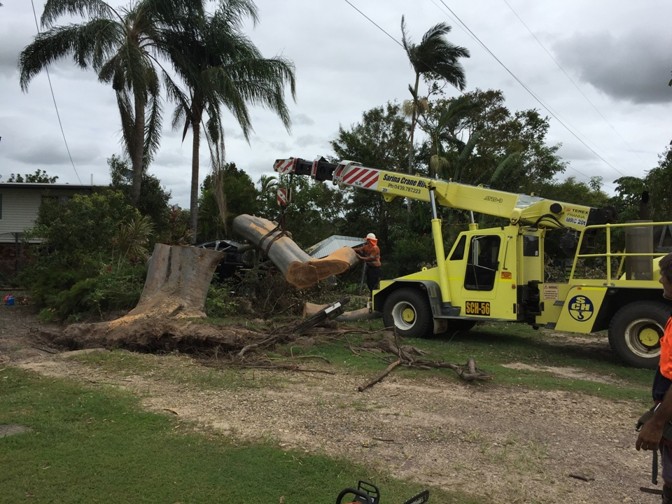 Tree Lopping - Tree Removal