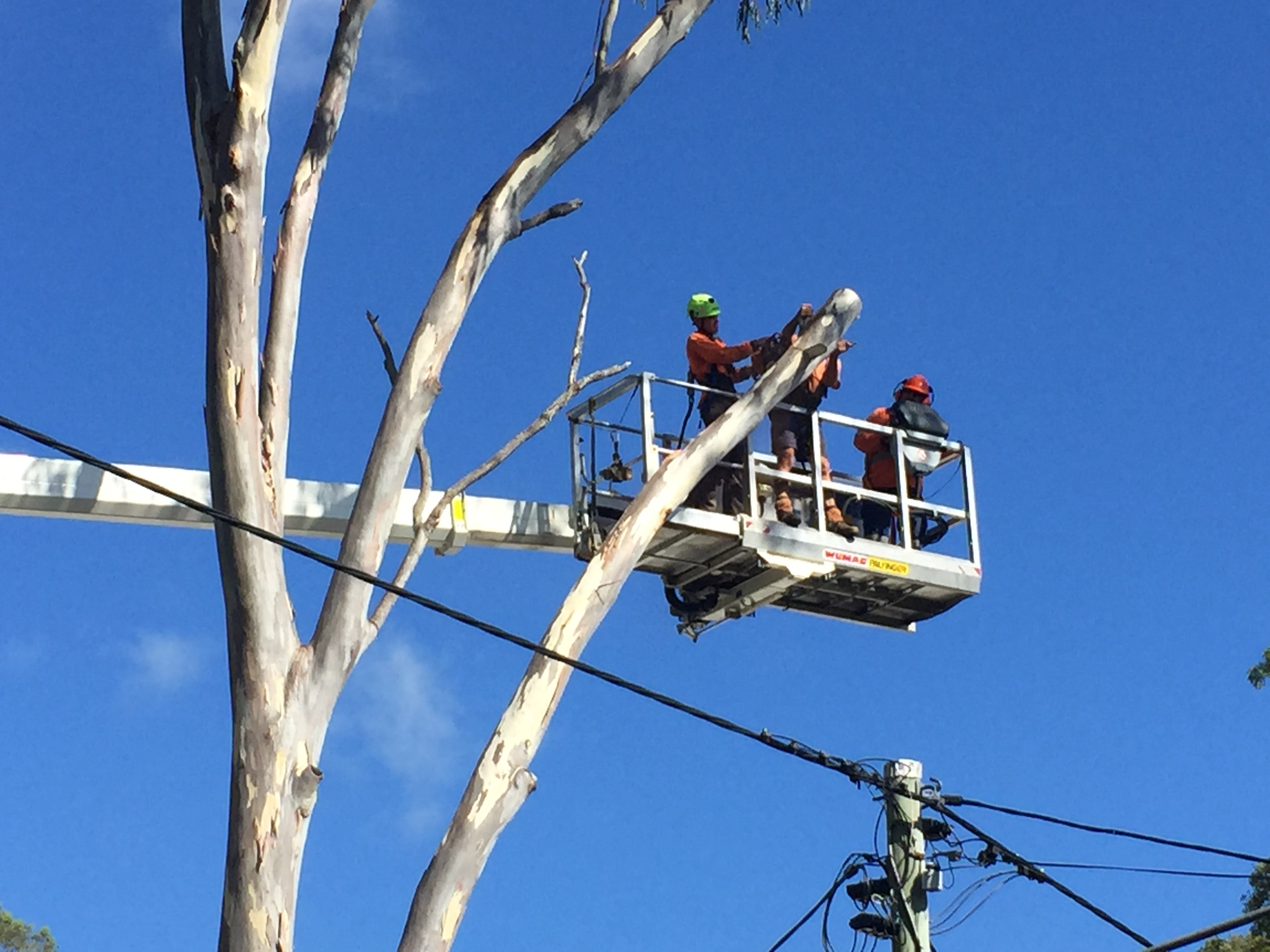 Tree Lopping - Tree Surgery