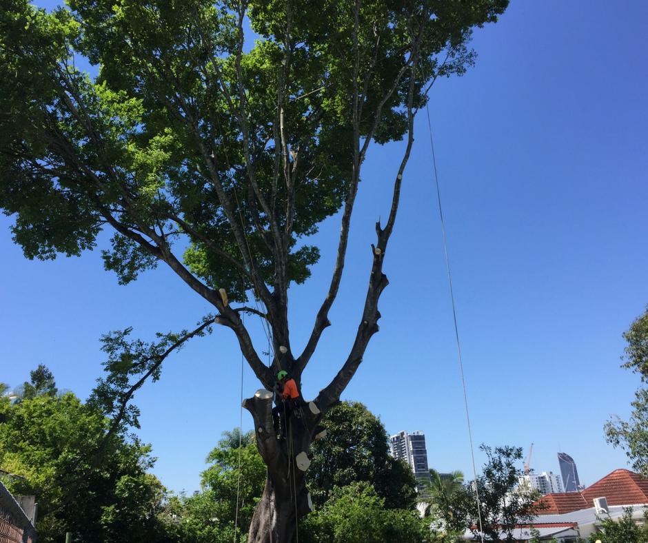 Tree Pruning - Tree Care