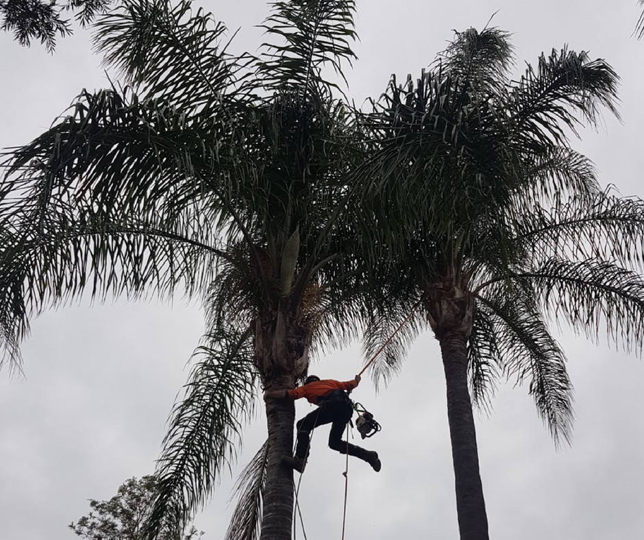 Palm Maintenance and Tree Solutions