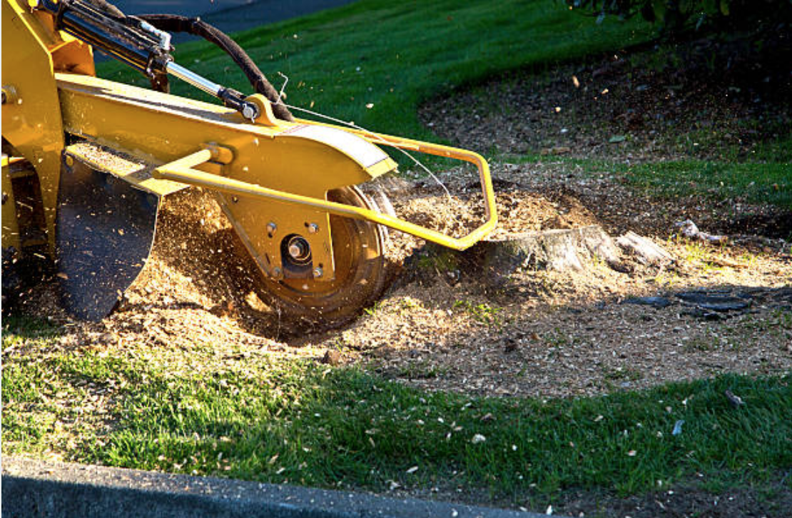Tree Care - Stump Grinding