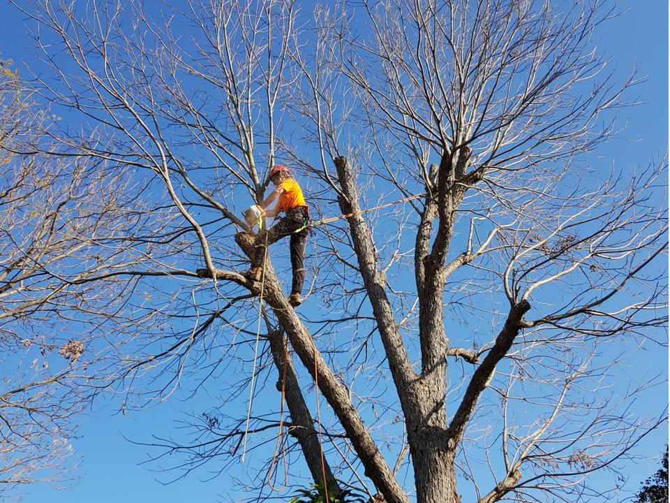 Tree Surgery Brisbane