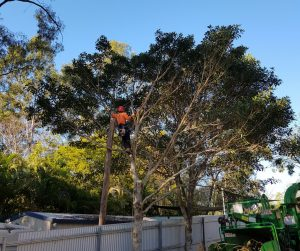 Caring For Your Trees