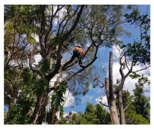tree lopping brisbane