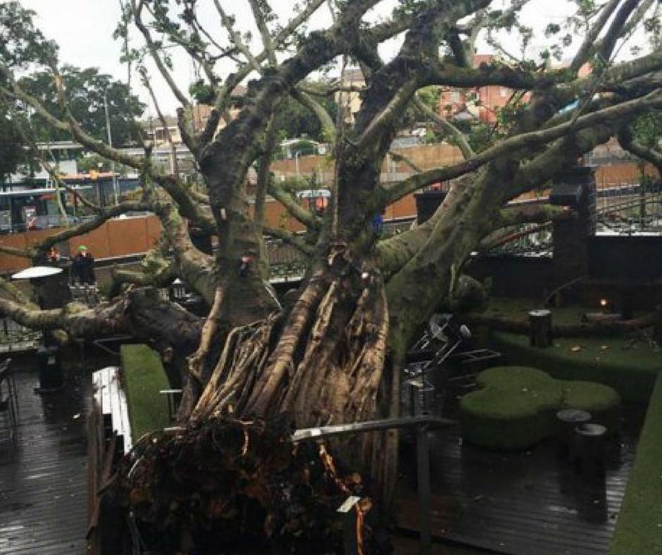 Tree Problems Ipswich