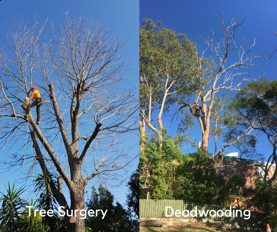 Tree Surgery and Dead Wooding