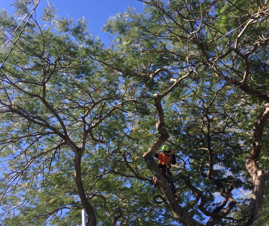 Tree Pruning Ipswich