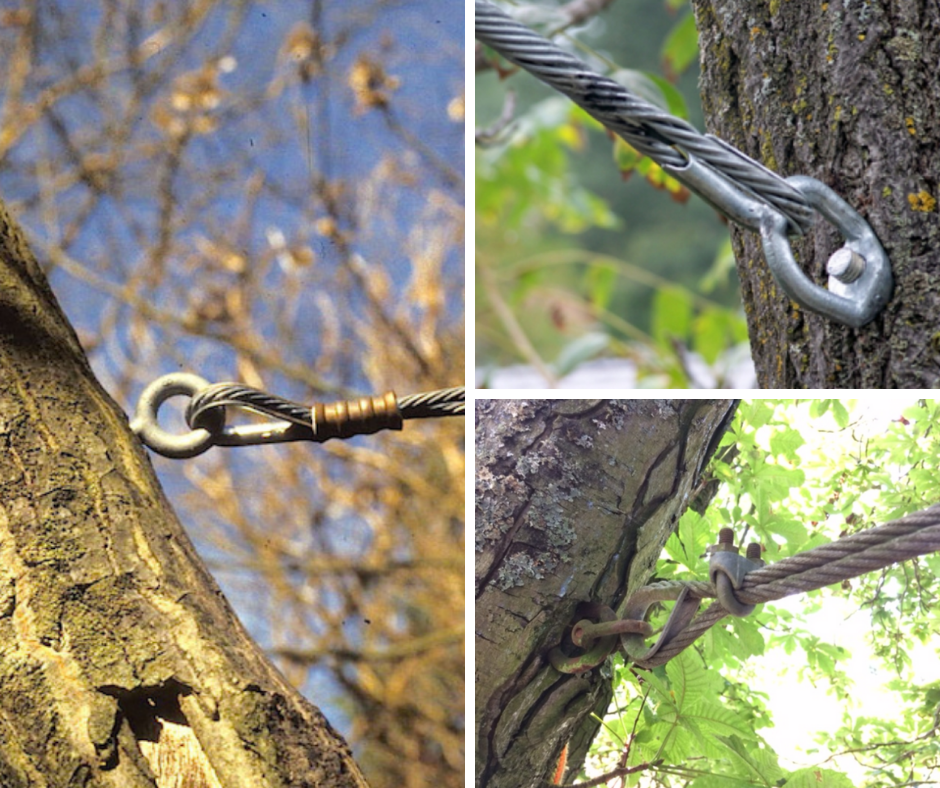How to keep trees upright - Tree Cabling and bracing