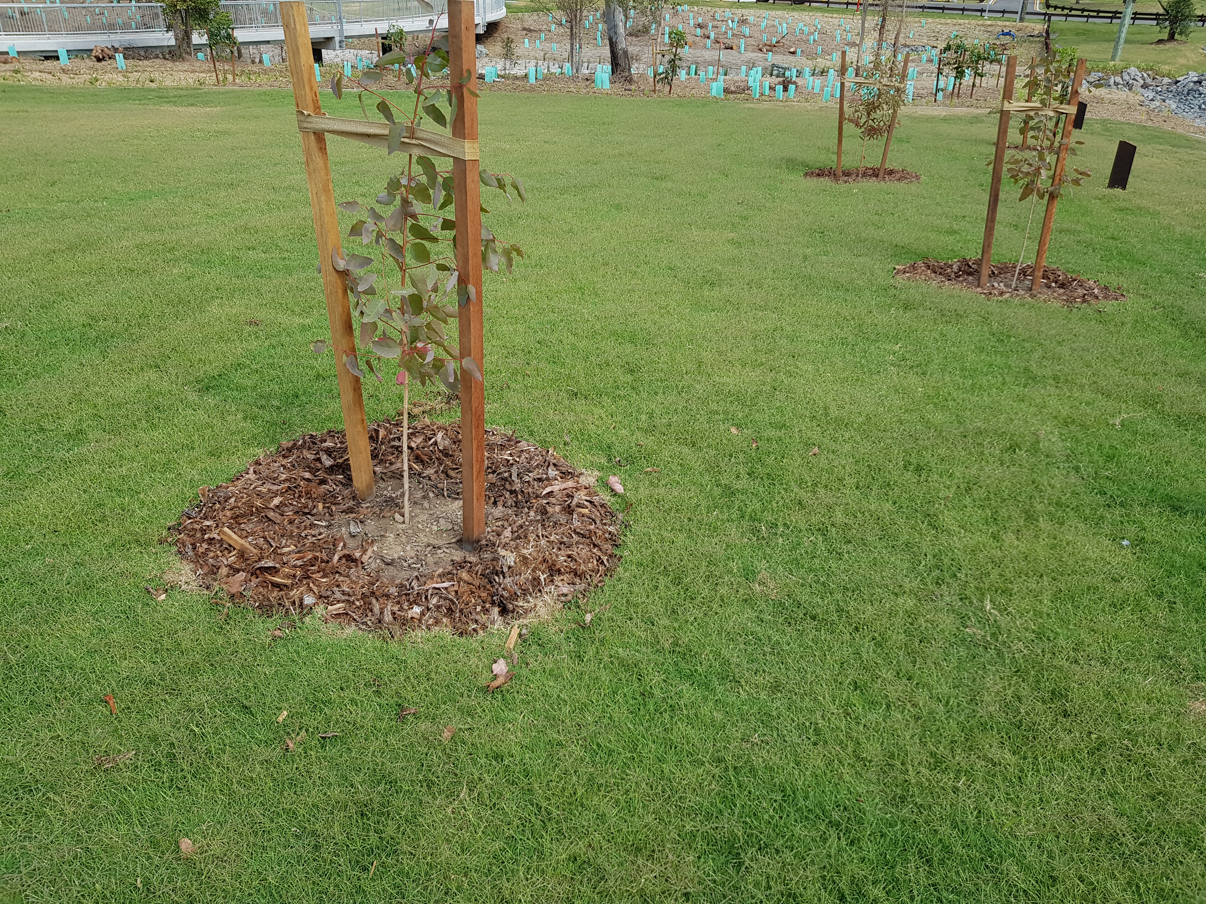 Landscaping and Tree Planting
