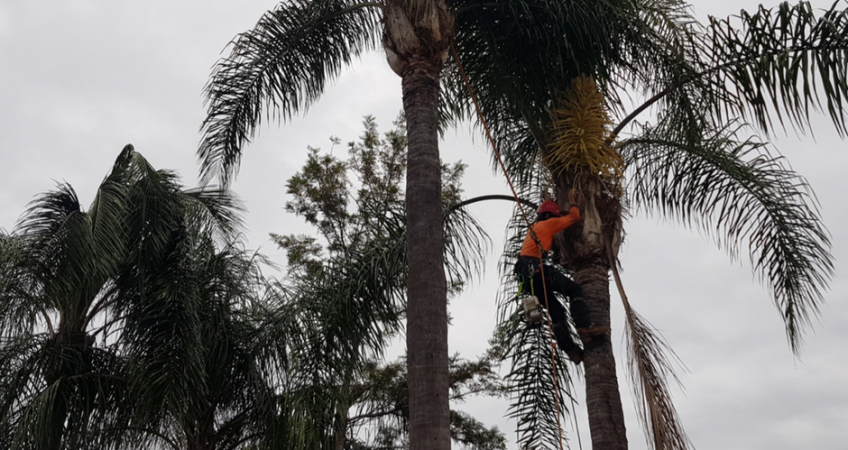 Palm Tree Maintenance