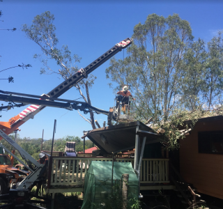 tree removal after storm damage