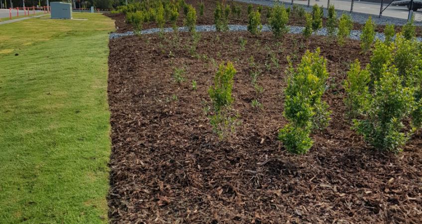 Tree Planting Brisbane