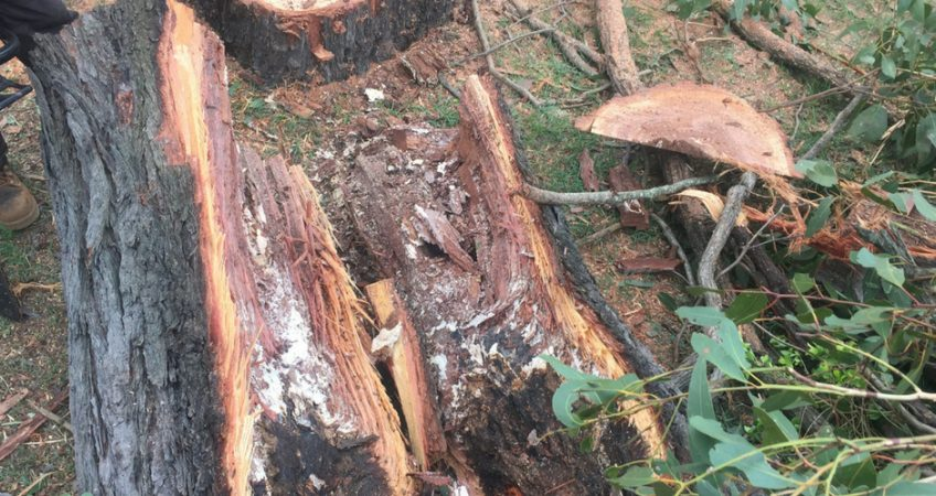 Tree Problem Services