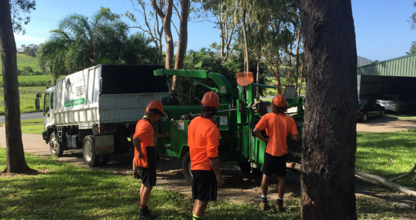 Tree Lopping - Land Development Clearing